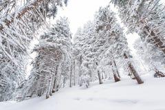 Sneeuw, de winter, landschap, sneeuw stock foto