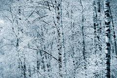 Sneeuw de winterbos Royalty-vrije Stock Foto