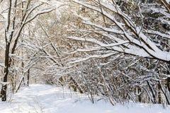 Sneeuw de winterbos Royalty-vrije Stock Fotografie