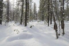 Sneeuw de winterbos Stock Afbeeldingen