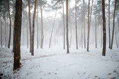 Sneeuw de winterbos met bomen Stock Afbeeldingen