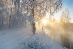 Sneeuw de winterbos met struiken en bomen op de banken van de rivier met mist, Rusland, het Oeralgebergte Stock Afbeelding