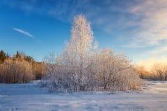 Sneeuw de winterbos met struiken, Rusland, het Oeralgebergte, stock afbeelding