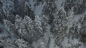 Sneeuw de winterbos in Noorwegen stock videobeelden