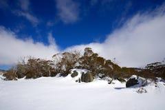 Sneeuw de winterlandschap Stock Afbeeldingen
