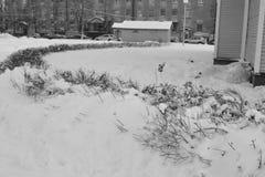 Sneeuw de winterlandschap Royalty-vrije Stock Foto's