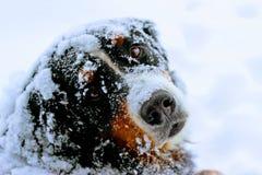 Sneeuw de Winterochtend royalty-vrije stock fotografie