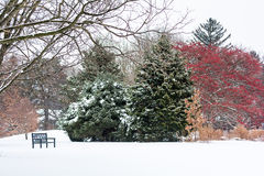 Sneeuw de Winterpark Royalty-vrije Stock Afbeelding