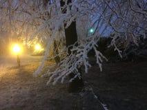 Sneeuw de wintersnacht in Bratislava Slowakije Stock Foto's