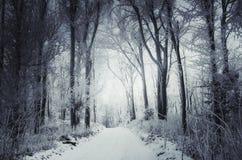 Sneeuw de winterweg door het hout stock fotografie