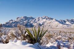 Sneeuw in de woestijn Royalty-vrije Stock Fotografie