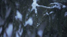 Sneeuw die bij de Langzame motie van sparrentakken vallen stock videobeelden