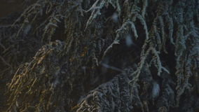 Sneeuw die bij Nacht 04 vallen stock videobeelden
