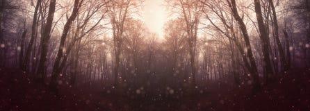 Sneeuw die in de herfstbos vallen stock afbeeldingen