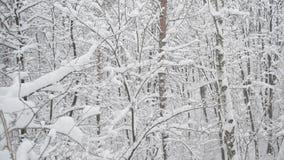 Sneeuw die in leafless sneeuw vergankelijk bos in de winter vallen stock videobeelden