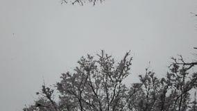Sneeuw die met sneeuw op takken van boom in de winter vallen stock video