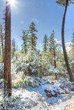 Sneeuw die in Nevada vallen Royalty-vrije Stock Foto's