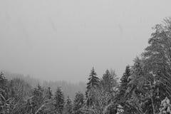 Sneeuw die op bomen vallen Stock Afbeeldingen