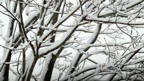 Sneeuw die op Boom ontbreken stock videobeelden