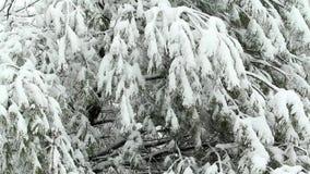 Sneeuw die op Boom ontbreken stock footage