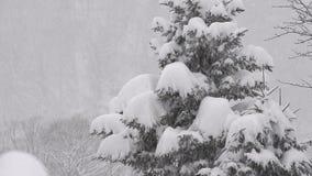 Sneeuw die op de boom, in Toyama, Japan vallen stock video