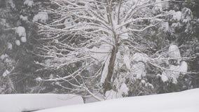Sneeuw die op de boom, in Toyama, Japan vallen stock videobeelden