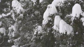 Sneeuw die op het bos, in Toyama, Japan vallen stock videobeelden