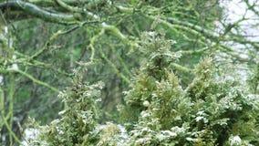 Sneeuw die op kruidentuininstallaties vallen stock footage