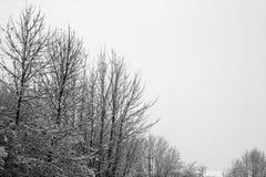 Sneeuw die op Naakte Bomen valt Stock Fotografie