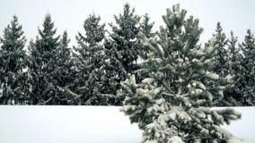 Sneeuw die op pijnboom en sparren langzame motie vallen stock video