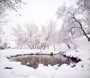 Sneeuw die riverbank met bomen wordt behandeld Stock Afbeelding