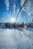 Sneeuw die van boom hierboven vallen Stock Foto