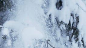 Sneeuw die van sparrentakken vallen stock footage