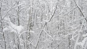 Sneeuw die in vergankelijk bos op achtergrond vallen van stock video