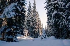 De Bomen van de sneeuw Royalty-vrije Stock Foto