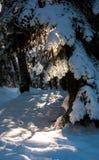 De Bomen van de sneeuw Royalty-vrije Stock Foto's