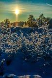Sneeuw en blauwe hemel met wolken en stok Stock Fotografie