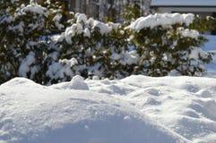 Sneeuw en bont Stock Afbeeldingen