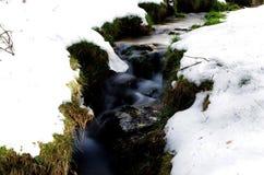 Sneeuw en de lente Stock Fotografie