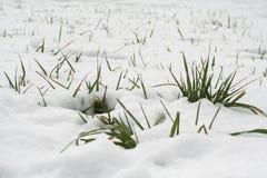 Sneeuw en gras Royalty-vrije Stock Fotografie