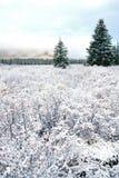 Sneeuw en het Landschap van de Winter stock afbeeldingen