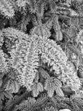 Sneeuw en ijs Stock Foto's
