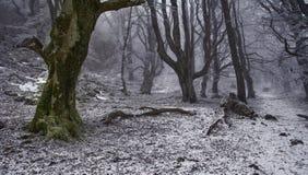 Sneeuw en mist in het bos Stock Afbeelding