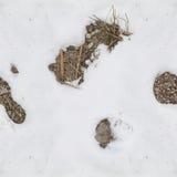 Sneeuw en rotspatroon voor camouflage Stock Foto