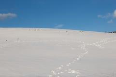 Sneeuw en voetstappen stock foto