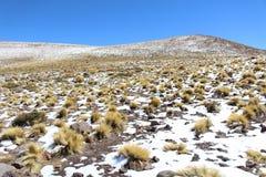 Sneeuw en Zon in woestijn Royalty-vrije Stock Fotografie