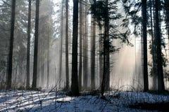 Sneeuw en zonneschijn Stock Fotografie