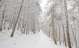Sneeuw Geladen Sleep Royalty-vrije Stock Afbeeldingen