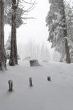 Sneeuw in het bos Stock Afbeeldingen