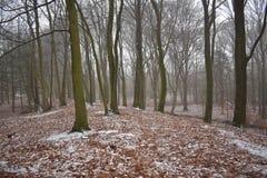 Sneeuw in het bos stock foto